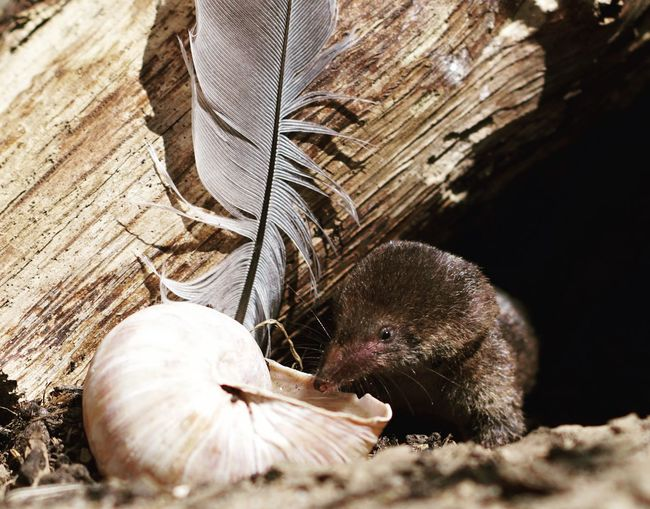 Close-up of mouse and seashell outdoors