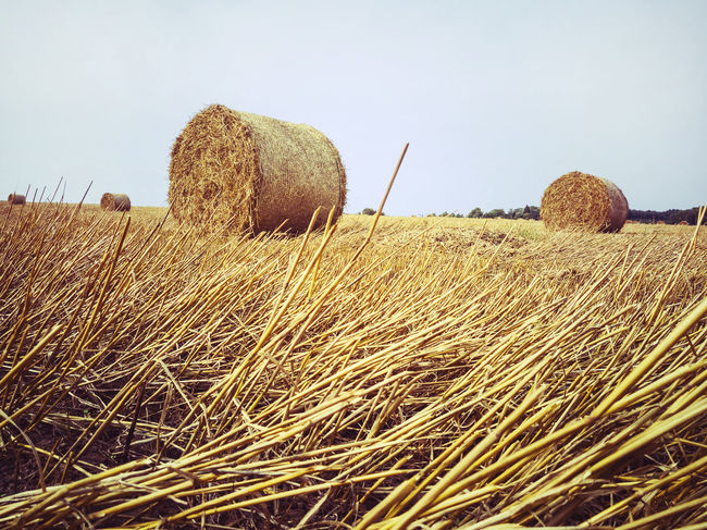 Country Rural Rustic Agriculture Bale  Beauty In Nature Clear Sky Country Life Day Farming Field Harvesting Hay Hay Bale Haystack Landscape Nature No People Outdoors Rural Scene Sky Straw Straw Bales Tranquil Scene Tranquility