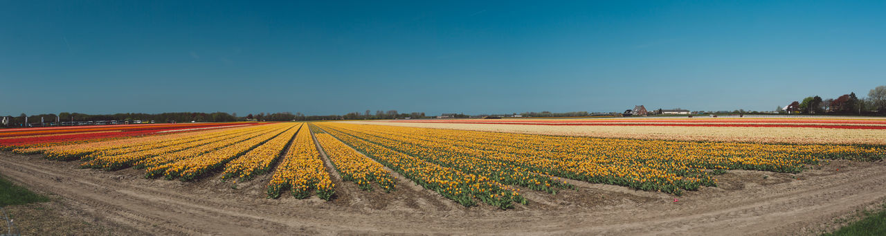 Netherlands Agriculture Beauty In Nature Blue Copy Space Crop  Environment Farm Field Growth Land Landscape Nature No People Outdoors Park Plant Rural Scene Scenics - Nature Sky Spring Tranquil Scene Tranquility Yellow
