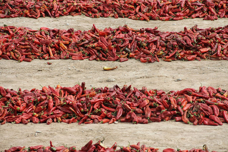 High Angle View Of Red Chili Peppers On Field