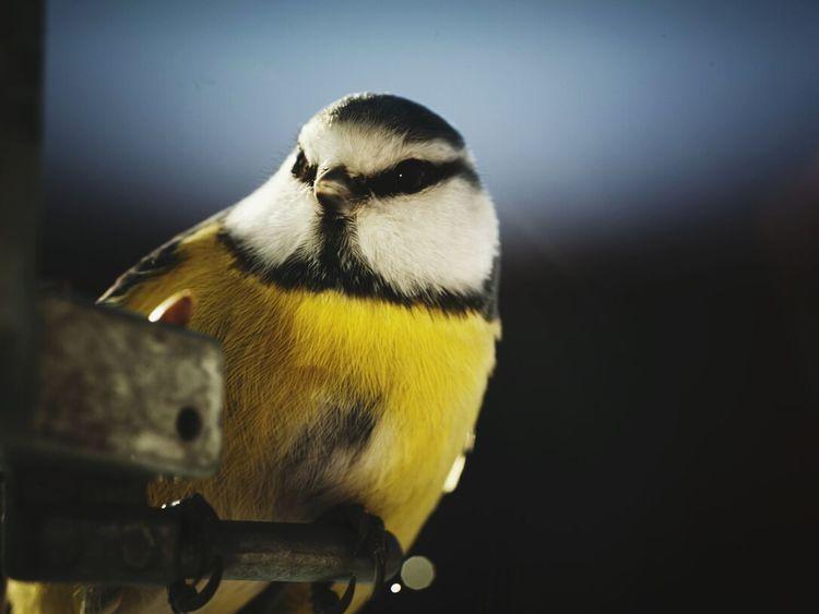 Winter Nature Bird Bird Photography