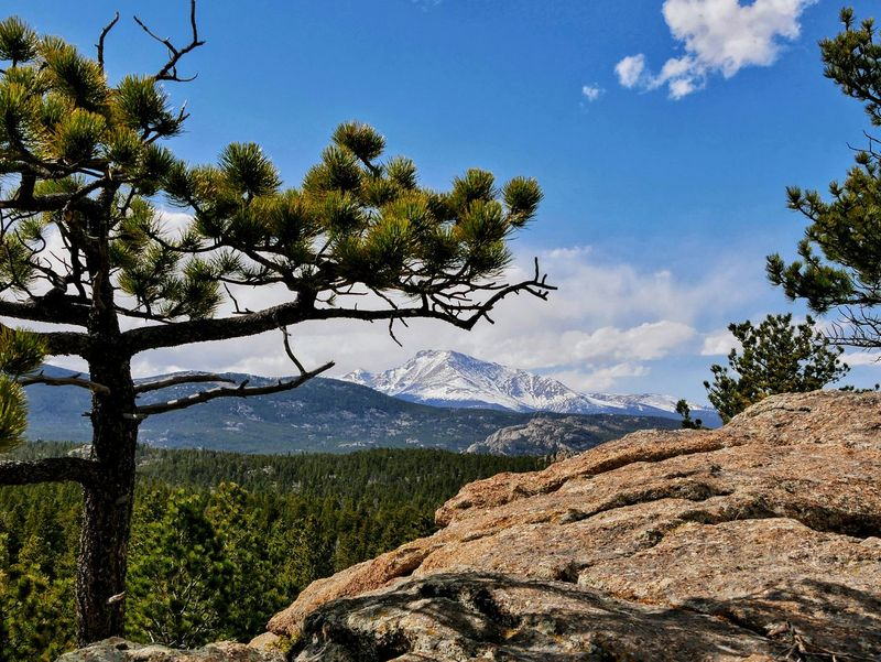 Tree Nature Mountain Day Beauty In Nature Landscape Outdoors No People Mountain Range Sky Scenics Growth Branch Colorado Been There.