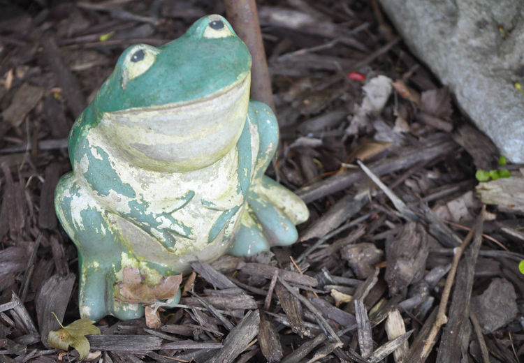 Frog Statue in a Garden Statue Amphibian Animal Animal Themes Figurine  Garden Nature No People One Animal Outdoors