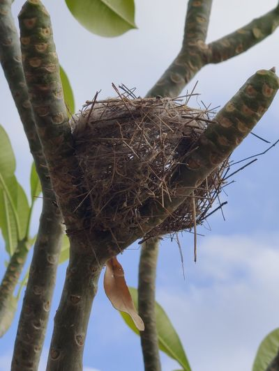 Low angle view of bird nest on tree