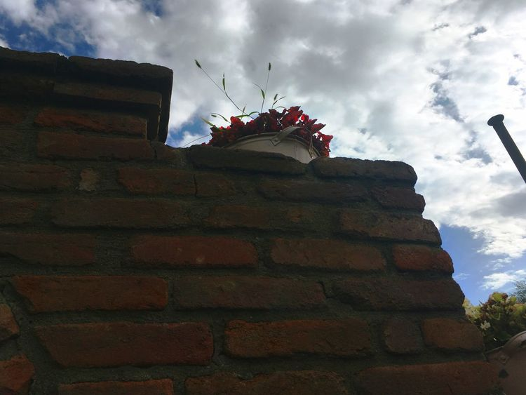 Sky Cloud - Sky Low Angle View Architecture Built Structure Building Exterior No People Outdoors Day Sculpture Statue Flower Nature Flowers Sky And Clouds Blue Sky Georgia Red Flower Brick Brick Wall Pot Creativity Nature Garden Alone Perspectives On Nature