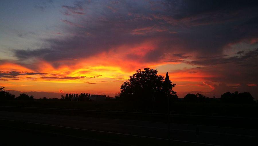 #sunsetboulevard Tree Multi Colored Silhouette Sky Cloud - Sky Landscape