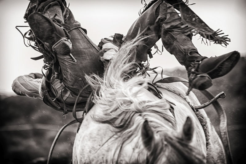 Rodeo cowboy about to be thrown from horse Action American Black And White Boots Close-up Competition Contests Cowboy Day Dramatic Sky Ellicottville, NY Equestrian Equine Horse Horse Photography  Horseback Riding Low Angle View Outdoors Rider Rodeo Sport United States Vintage Western United States