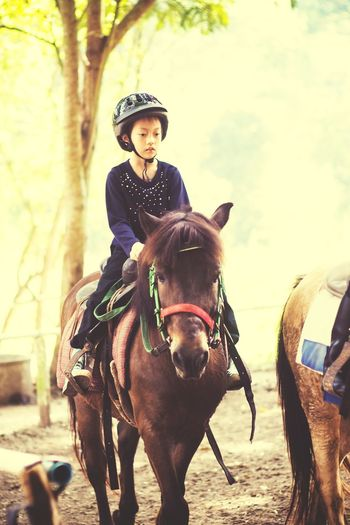 Kid Kid And Horse Horse And Kid Horse Running Horse Riding Horse Racing Horseback Riding Horse Life Kid Horse Child Young Women Riding Horseback Riding Headwear Horse Cowboy Hat Cowboy Working Animal Jockey Horse Racing Horsedrawn Horse Cart