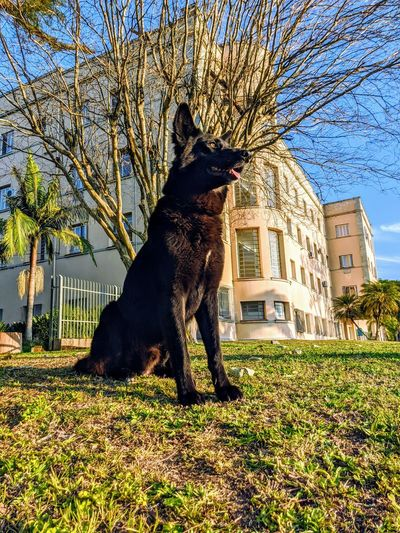 Dog standing by tree against building