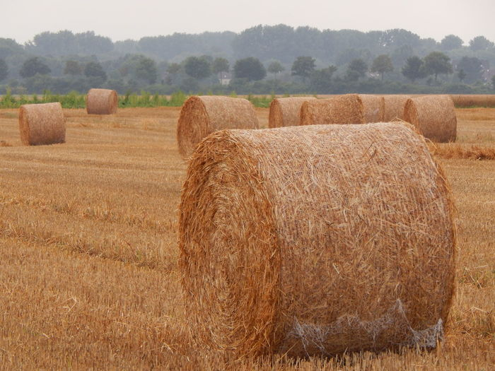 Hay bales on agricultural field