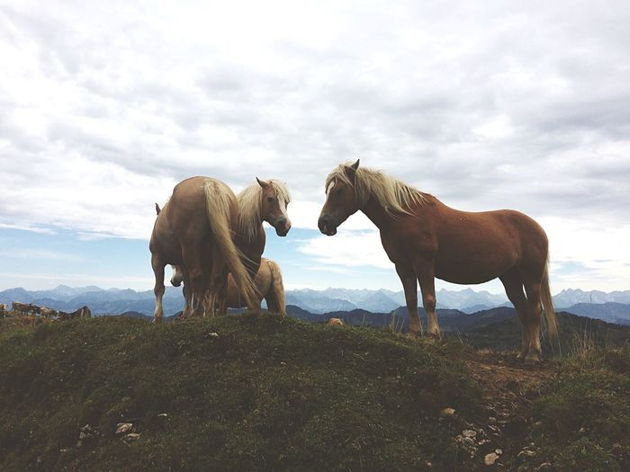 Brown Horses Standing Against Mountains