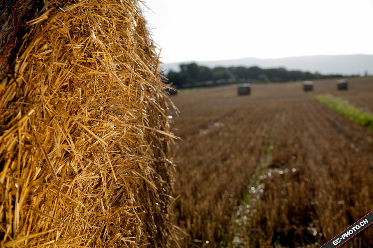 bale, hay, agriculture, farm, hay bale, field, rural scene, harvesting, crop, straw, landscape, no people, haystack, outdoors, nature, day, sky, close-up, beauty in nature, clear sky, combine harvester