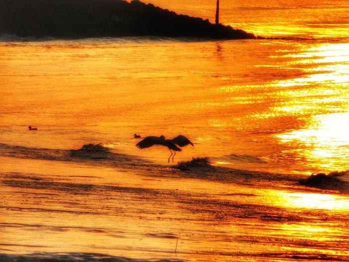 有明海 カタ 野鳥 日の出 朝日 朝焼け 朝チャリ Sea 海 Ragoon Sunrise Morning 朝 Water Reflection Good Morning Animals In The Wild Wildbird Sunset Animal Wildlife Animal Themes Nature Beauty In Nature Bird Sky