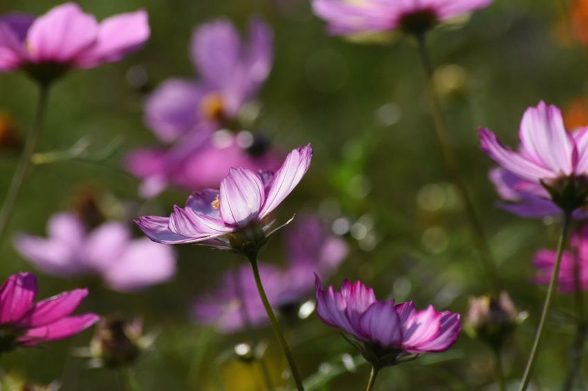 Sunlight Autumn Collection EyeEm Flower Flower Flowering Plant Plant Vulnerability  Beauty In Nature Fragility Freshness Petal Close-up Flower Head Focus On Foreground