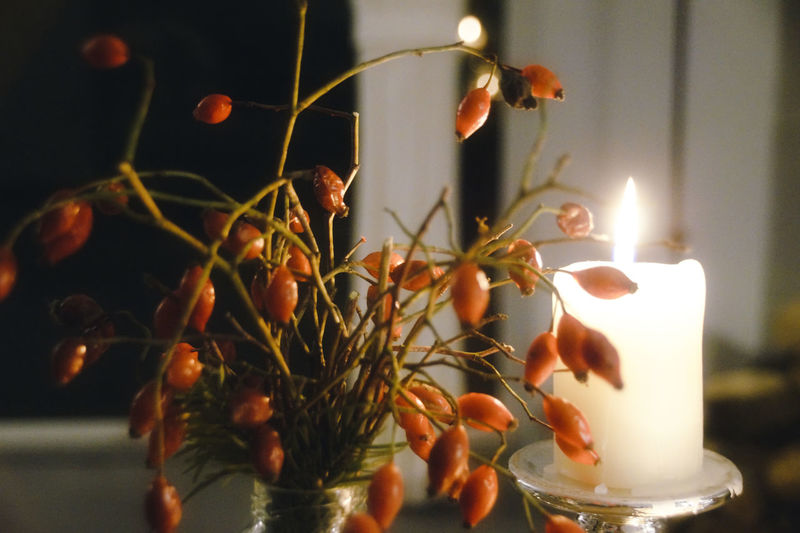 Close-up of candles on plant