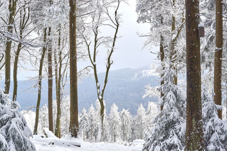 Beauty In Nature Cold Temperature Day Frozen Landscape Mountain Nature No People Outdoors Scenics Snow Tranquil Scene Tranquility Tree Weather White Color Winter