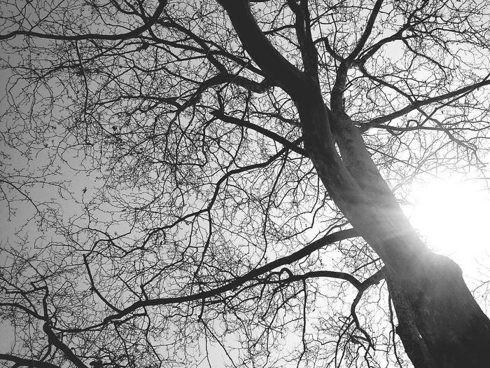 Blackandwhite Tree Weather Goodday