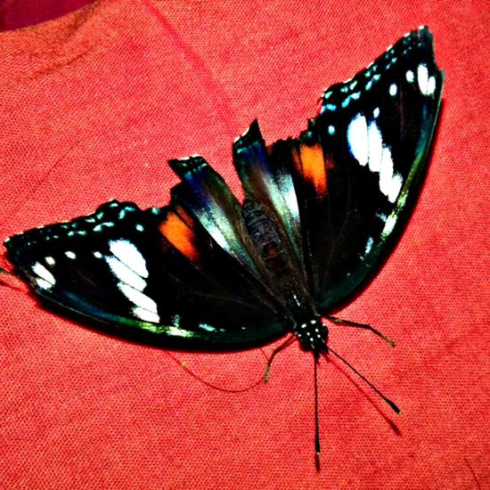Butterfly Animal Wings On My Bed Taking Photos Eyeem4photography Antena This Evening EyeEm Indonesia