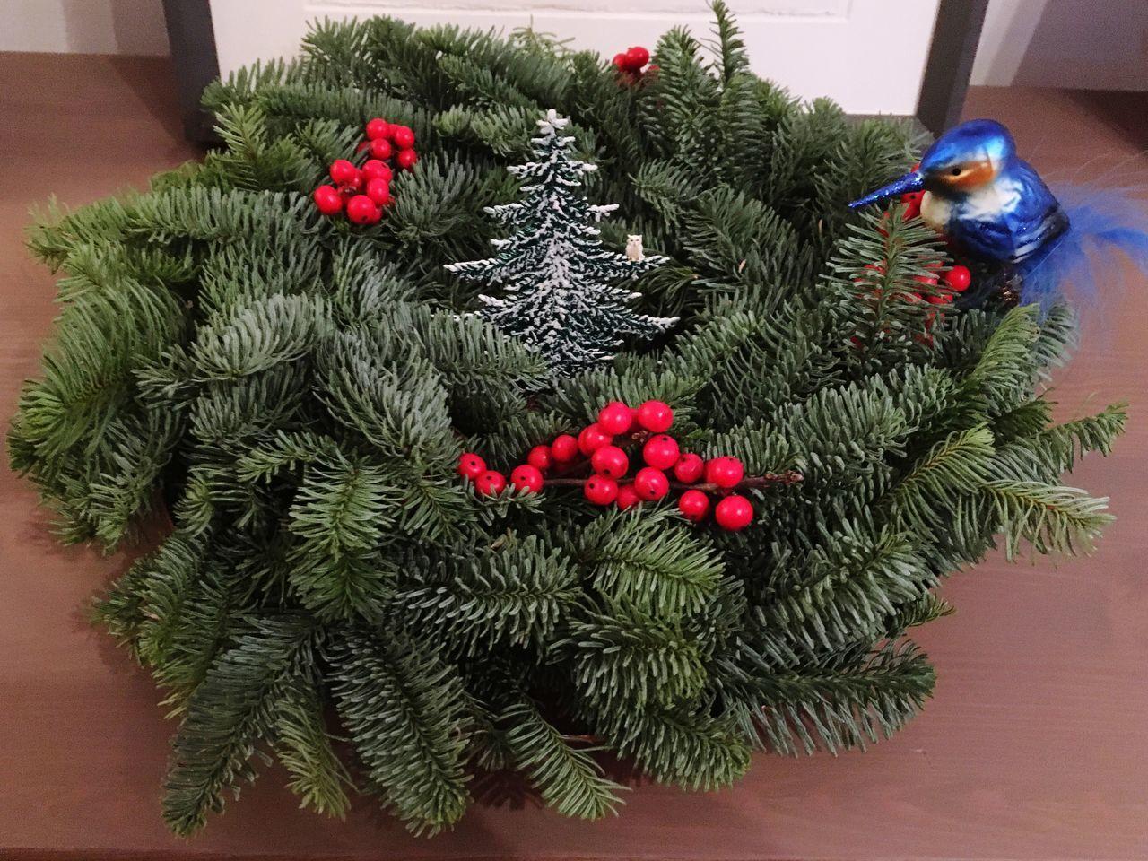 HIGH ANGLE VIEW OF CHRISTMAS TREE ON PLANT