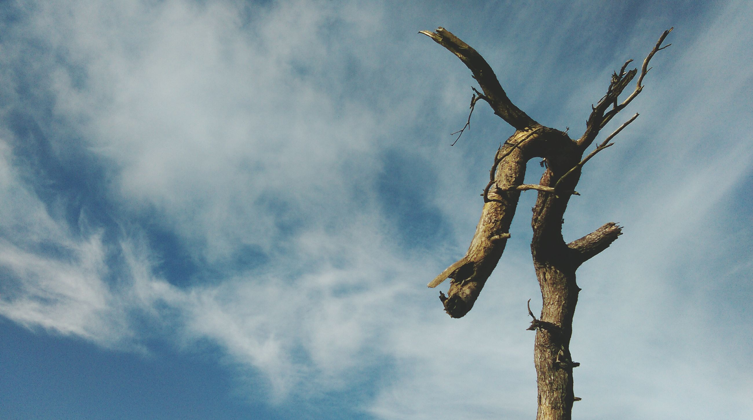 low angle view, cloud - sky, animal wildlife, sky, outdoors, no people, bird, one animal, animals in the wild, tree, day