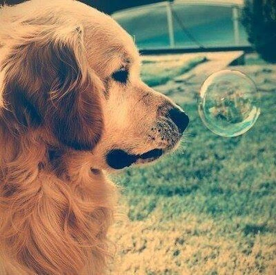 cute ♥ Eyem Gallery Hellooo Eyem !  Animals Sweet Moments