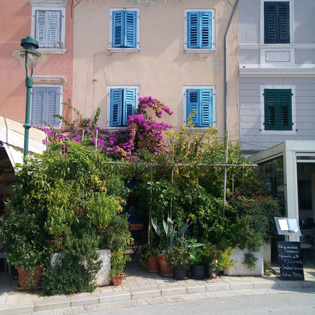 Old colorful rustic house with blue shutters, flowering bushes and pink oleander flowers in the old part of Rovinj in Croatia, Europe. Croatia EyeEmNewHere Istra Plants Romantic Rovinj Shutters Adriatic Adriatic Sea Architecture Blue Building Exterior Colorful Wall Europe Flower Garden Istria Old House Oleander Outdoors Plant Rovigno Street Tourism Windows
