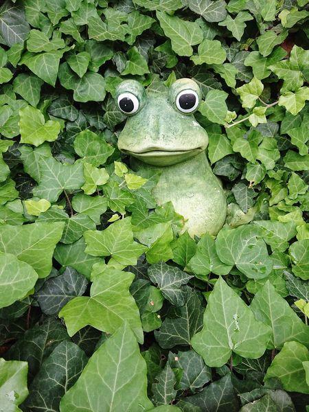 Froggy frog Greenleaves Ivy Leaves Sculpture Frogsculpture Leaf Backgrounds Full Frame Close-up Green Color Frog Amphibian