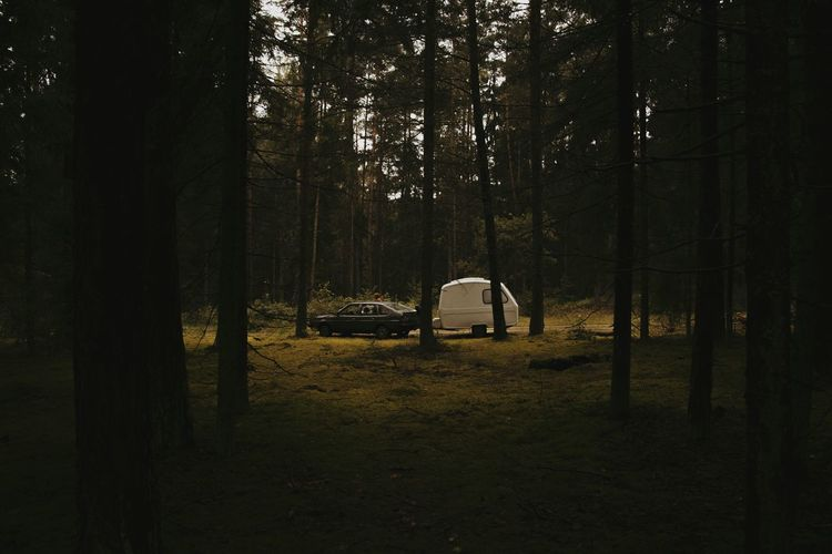 Camping Forest Tree WoodLand Outdoors Beauty In Nature Nature Vacations Tree Trunk Growth Wilderness Mood Week On Eyeem Week Of Eyeem Minimalism Tree Area Minimal Dark Vscocam VSCO Nature_collection Tranquil Scene Tranquility Non-urban Scene The Week On EyeEm