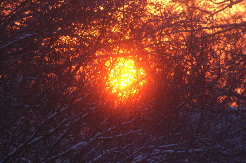 sunset through the trees Forest Sunrise Sunrise Through The Trees Tree Nature Sunlight Plant Orange Color Branch Sun No People Beauty In Nature Land Sunset Outdoors WoodLand Tranquility Sky Growth Day Sunbeam Heat - Temperature Streaming
