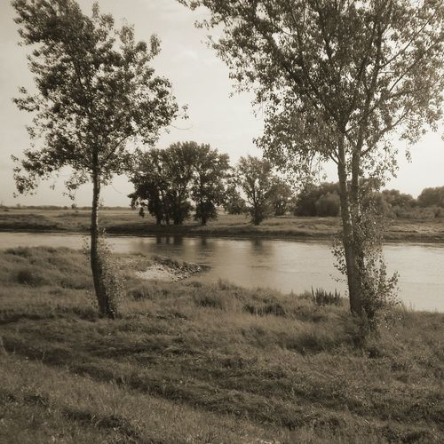 EyeEm Sepia_Collection Treescollection Eyeem Sepia Lake Sepia Trees Sepia_collection Sepia Photography EyeEm Gallery Eye4photography  Eyeem Lakes Trees And Nature Check This Out Nature_collection Naturelovers Landscape Landscape_Collection EyeEm Nature Landscape_photography Nature Photography Eyeem Nature EyeEm Nature Lovers Eyeemlake EyeEm Nature Lover