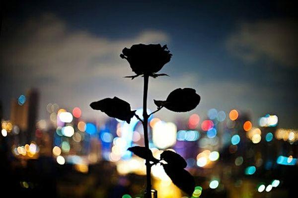 Gece Gul Night Rose🌹 Isik Light Karanlik Populer Photos Flower