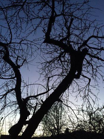 Morning Sky Nature Naturelovers tree