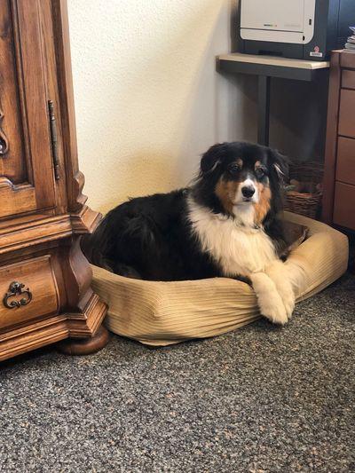 Portrait of dog resting on rug