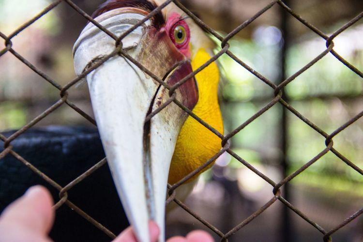 Close-up of cropped hand touching hornbill beak