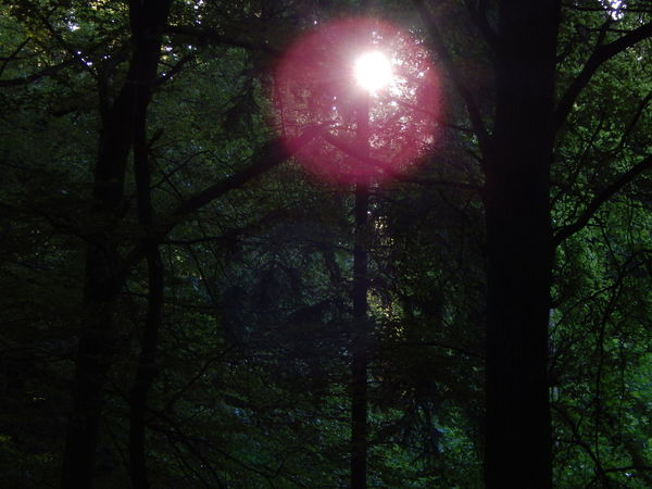 dark scenery in the forest Beauty In Nature Dark Dark Art Dark Forest Dark Green Dark Green Leaves Forest Green Green Color Green Leaves Idyllic Lens Flare Mystic Nature No People Outdoors Scenics Sun Sunbeam Sunlight Sunny Tranquil Scene Tranquility Tree WoodLand