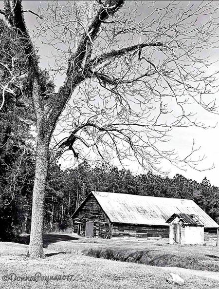 Black and white Tree Built Structure Architecture Building Exterior House Bare Tree No People Outdoors Beauty In Nature Branch Day Nature Scenics Roof Sky EyeEmNewHere