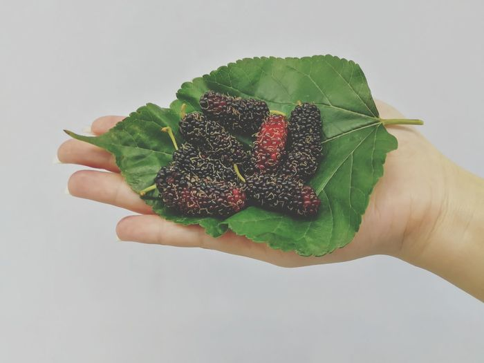 Mulberry Mulberry Eat Fresh Food Summer Background Fresh Sour Macro Colorful Ripe Floral Eating Vegetarian Nature Cook  Food Cooking Fruit Leaf White Background Hand Sweet Food Blackberry - Fruit Berry Custard Blackberry Blueberry Fruit Salad Berry Fruit Strawberry