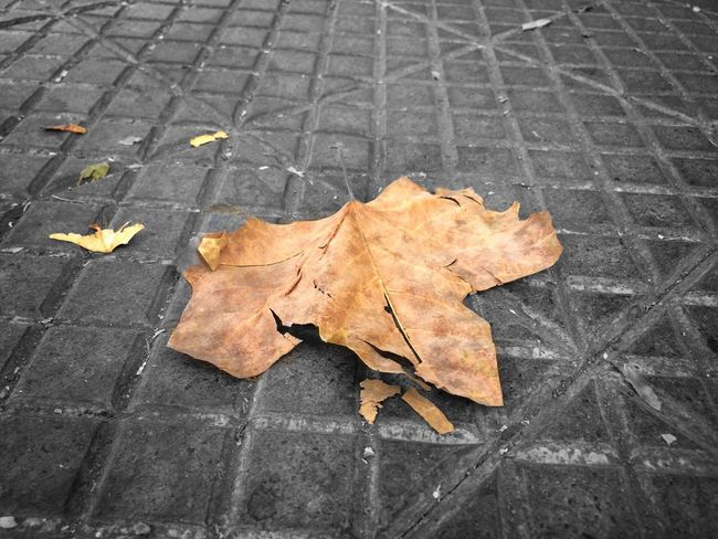 Hoja Seca Hojas Secas Fotografía Urbana me gusto mucho esta toma :)