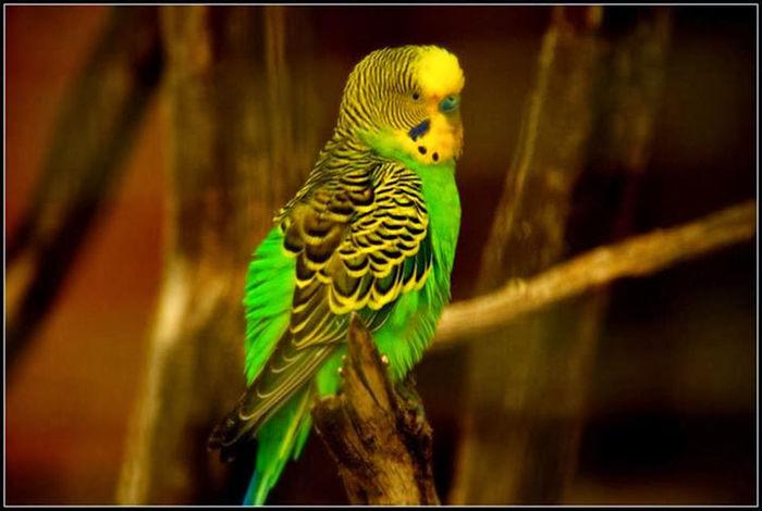 Oiseaux Bird Nature Couleurs Perroquet Volatile