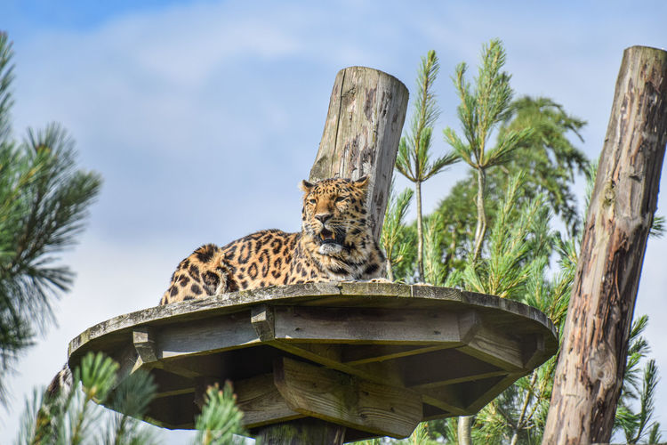 Low angle view of cat on wooden post against sky