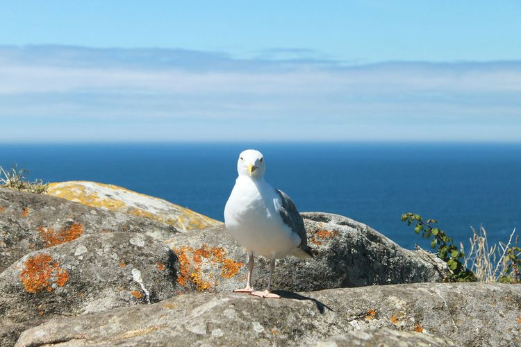 Portrait Of Seagull On Rock Formations Against Sea