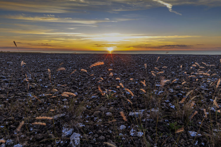 Baltic Sea Colors Nature Neptuni åkrar Sunlight Sweden Tranquility Landscape No People Sea And Sky Summer Sun Sunset Öland