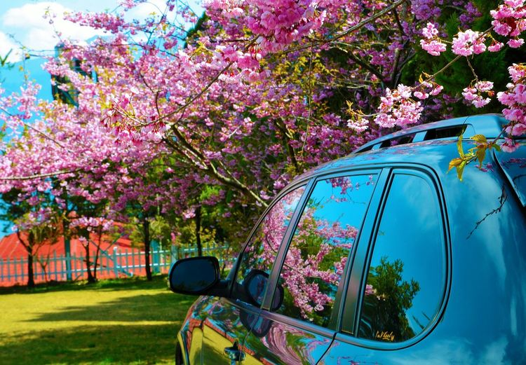 Car Mirrorreflection Reflection Flowers Pink Blue Mountain