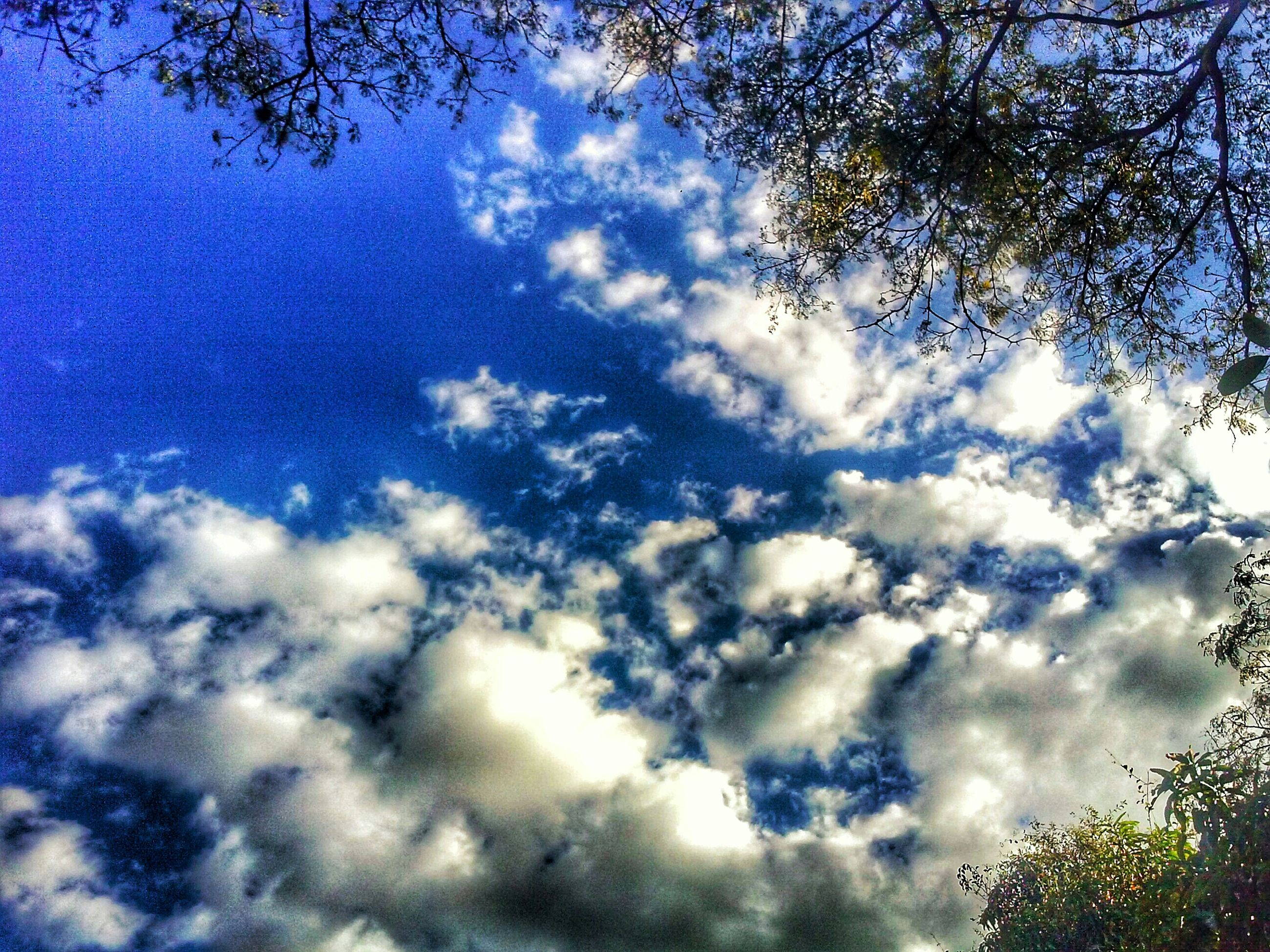 low angle view, sky, tree, cloud - sky, tranquility, beauty in nature, nature, cloudy, scenics, tranquil scene, cloud, growth, blue, branch, cloudscape, outdoors, silhouette, day, no people, idyllic