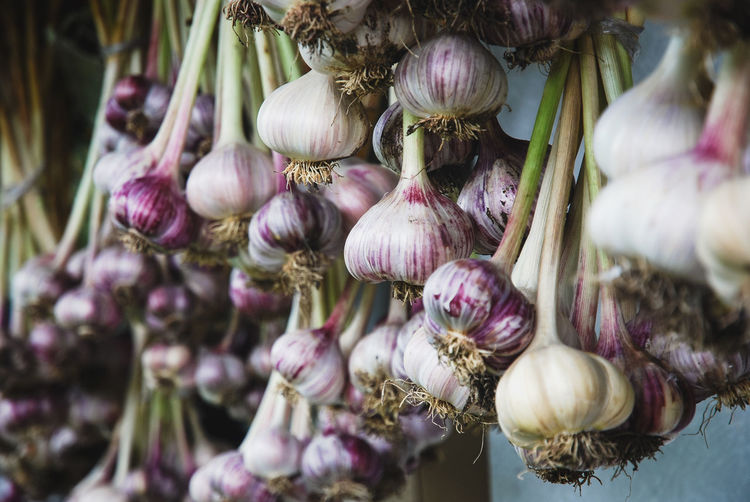Close-up of garlic hanging on plant
