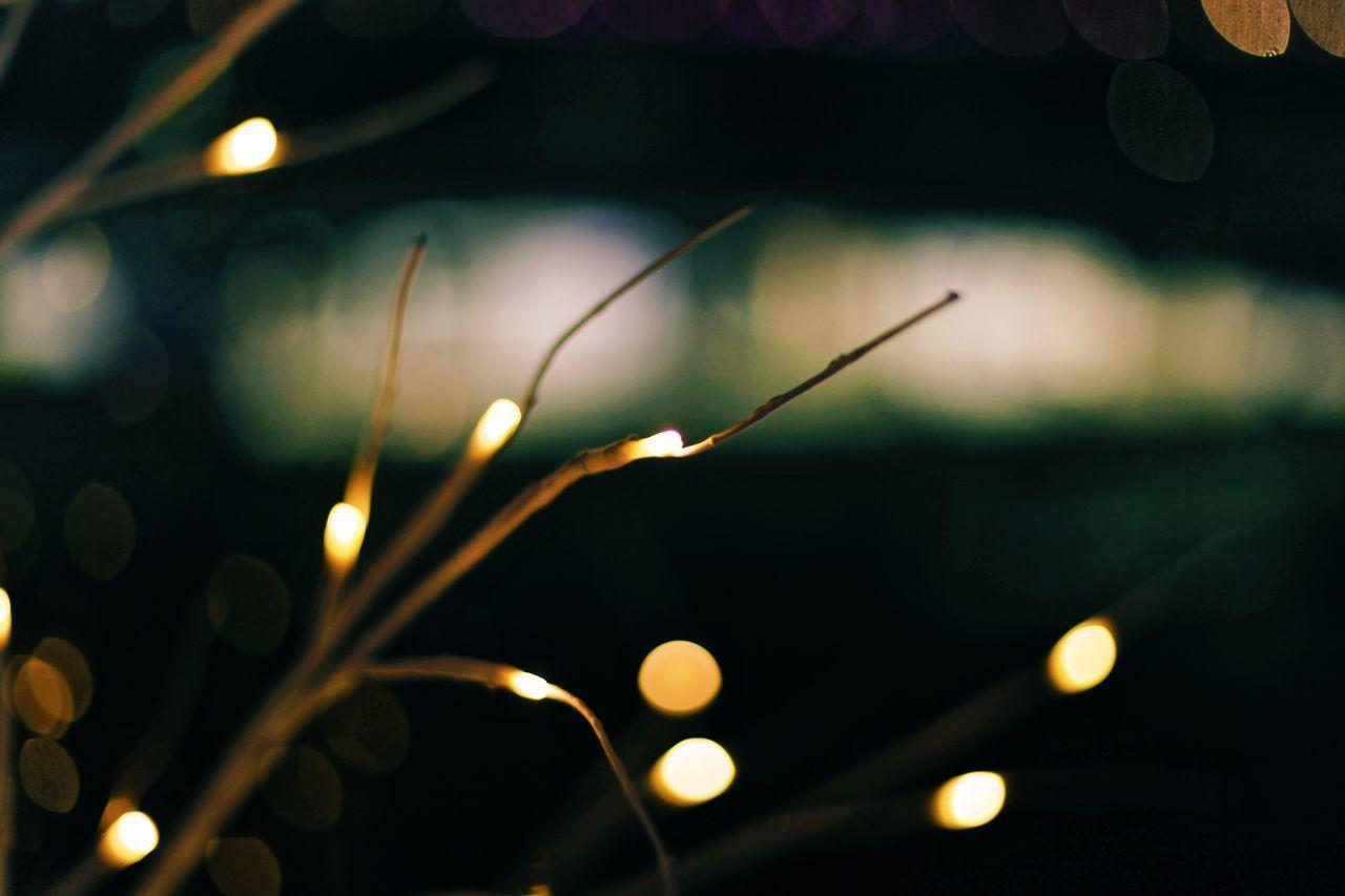 CLOSE-UP OF WET ILLUMINATED LIGHTS