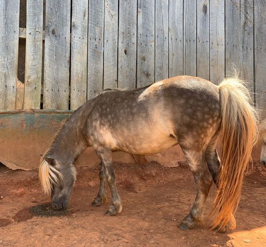 Horse Miniature