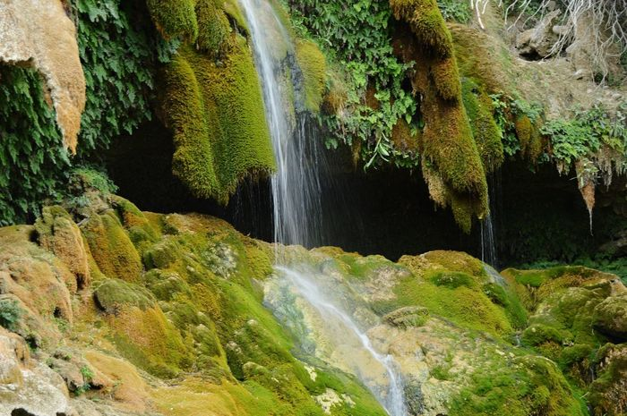beautiful parage Water Tree Waterfall Forest Motion Moss Green Color Flowing Water Stream Stream - Flowing Water Dam Power In Nature Rock - Object Reservoir Countryside Rock Formation Surf Hydroelectric Power