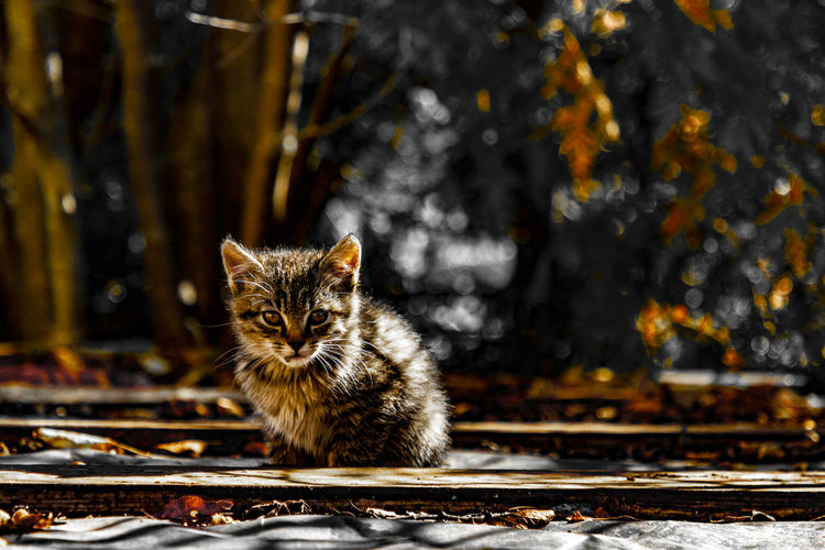 Pets Domestic Mammal Animal Themes Cat One Animal Domestic Animals Domestic Cat Animal Feline Portrait Sitting No People Vertebrate Day Looking At Camera Focus On Foreground Tree Nature Outdoors Whisker Tabby A New Beginning