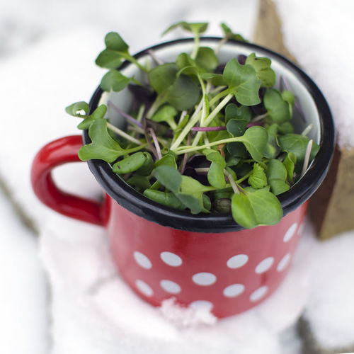 Close-up Day Drink Enamel Mug Food Food And Drink Freshness Green Color Healthy Eating High Angle View Indoors  Leaf Microgreens No People Ready-to-eat Red Refreshment Table Vegan Food